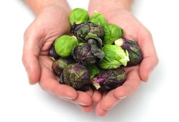 Польза и вред брюссельской капусты, применение в косметологии и народной медицине