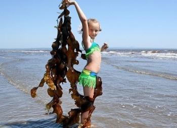 Лечебные свойства, польза и вред морской капусты для детей