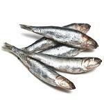 Анчоусы - виды, состав и калорийность рыбы