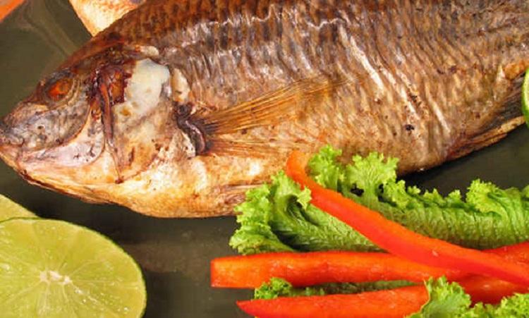 Чем полезна рыба тилапия, полезные свойства для организма