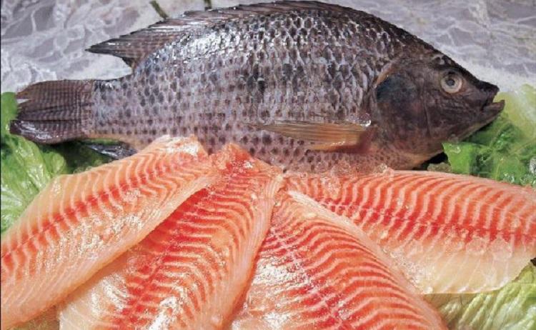 Полезные свойства рыбы тилапия, и как правильно выбирать продукт
