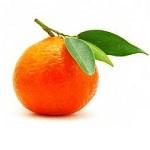 Польза и вред мандаринов для здоровья человека - основные моменты