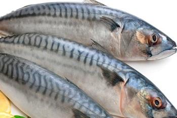 Правила выбора качественной рыбы - скумбрия и ее полезные свойства