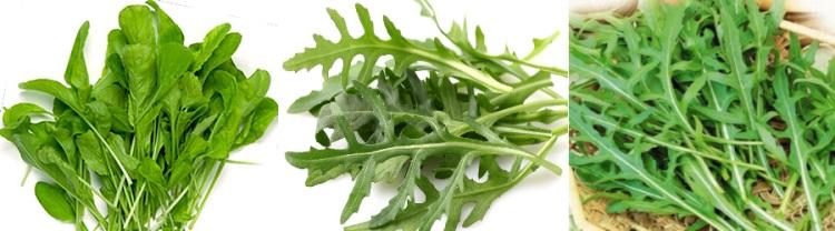 Салат руккола - польза и вред продукта
