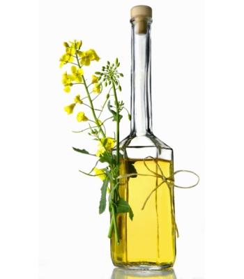 Польза и вред рапсового масла для взрослых мужчин и женщин