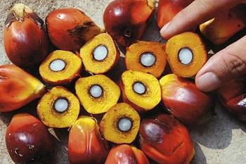 Полезно ли употребление пальмового масла для беременных женщин