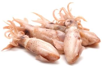 Польза и вред кальмаров, советы по выбору и хранению