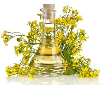 Польза и вред рапсового масла, применение в косметологии