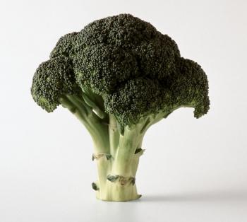 Капуста брокколи: польза и вред, советы по выбору качественного продукта