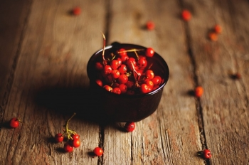 Красная рябина: полезные свойства для здоровья человека и противопоказания