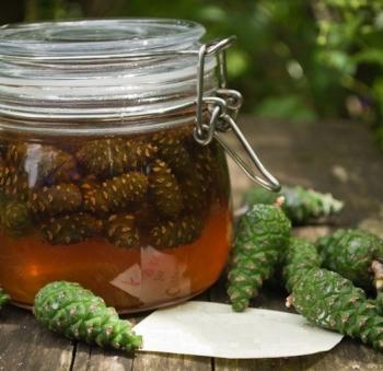 Варенье из сосновых шишек: польза и вред, применение для похудения