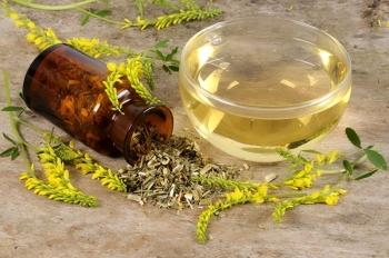 Донник лекарственный: полезные свойства и противопоказания, применение для похудения