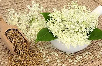 Как используют растение таволга в народной медицине - полезные рецепты