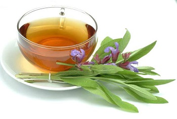 Лечебные свойства и применение люцерны в народной медицине