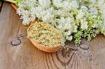 Лечебный эффект лабазника и применение растения в народной медицине