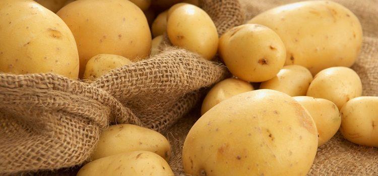 Польза и вред картофеля для здоровья человека - основные моменты