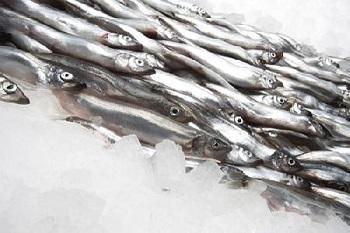 Правила выбора качественной рыбы - мойва и ее полезные свойства