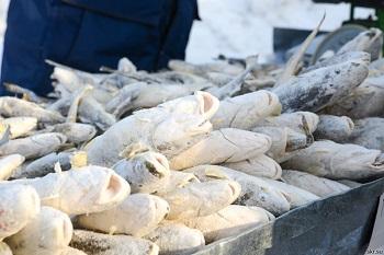 Правила выбора качественной рыбы - навага и ее полезные свойства