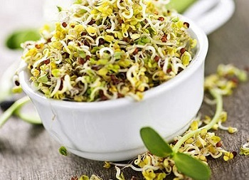 Противопоказания к употреблению люцерны и действие травы на организм
