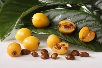 Противопоказания к употреблению машмулы и действие фрукта на организм