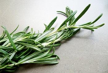 Противопоказания к употреблению розмарина и действие травы на организм