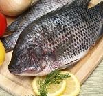 Рыба тилапия - состав и полезные советы по приготовлению
