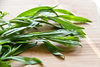 Состав и полезные свойства травы тархун - основные моменты
