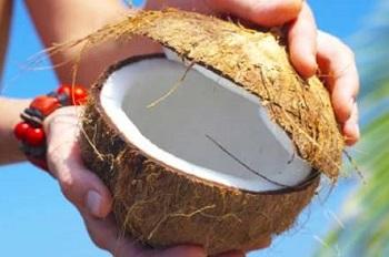 Целебные свойства кокоса, его состав и калорийность