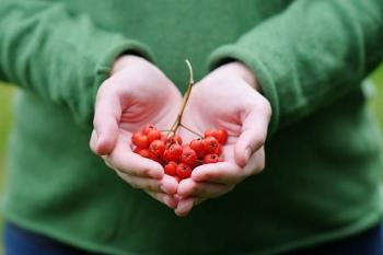 Красная рябина: полезные свойства для мужчин, женщин и детей, противопоказания