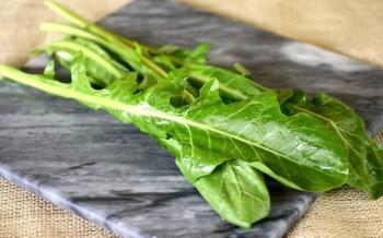 Листья одуванчика: полезные свойства и противопоказания для детей