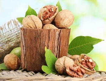 Грецкий орех: полезные свойства и противопоказания, польза для здоровья