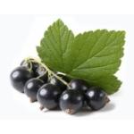 Ответ на вопрос, чем полезны листья черной смородины