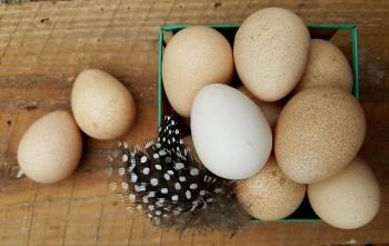 Яйца цесарки: польза и вред, полезные свойства для организма человека