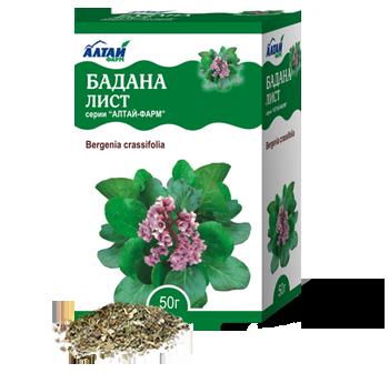 Бадан: лечебные свойства и противопоказания, области применения растения