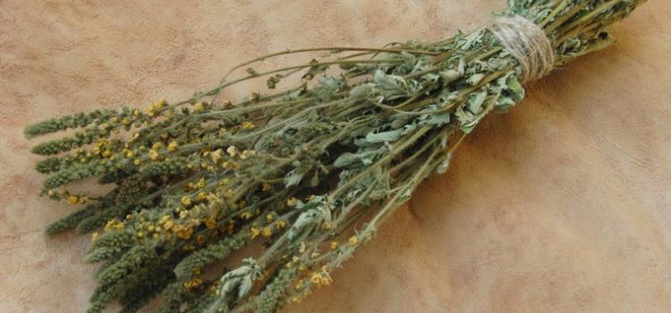 Репешок обыкновенный: полезные и лечебные свойства, противопоказания, фото, советы по выбору и заготовке сырья