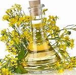 Чем полезно рапсовое масло, в том числе для организма мужчин и женщин