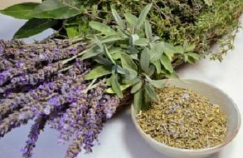 Как самостоятельно собрать и заготовить лекарственное растение иссоп