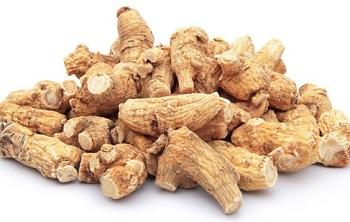Лечебные свойства и применение корня элеутерококка в народной медицине