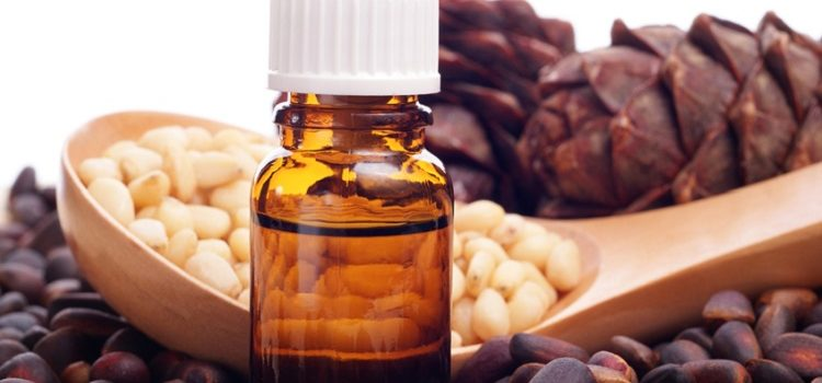 Полезные свойства и противопоказания к употреблению кедрового масла