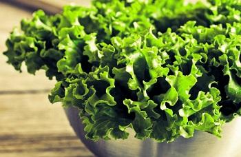 Полезные свойства листового салата для организма человека