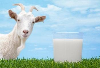 Правила выбора качественных продуктов - козье молоко и его полезные свойства