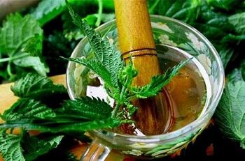 Противопоказания к употреблению крапивы и ее действие на организм