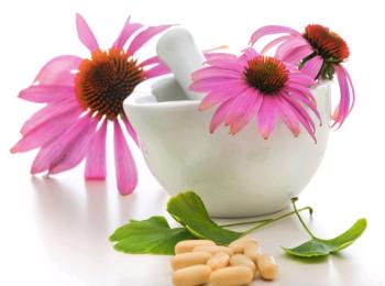 Эхинацея: лечебные свойства и противопоказания, польза и вред для мужчин и женщин