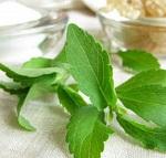 Стевия - польза и вред натурального сахарозаменителя