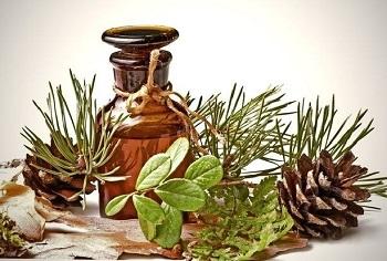 Употребеление кедрового масла в лечебных целях - полезные советы