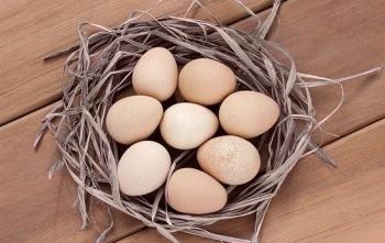 Яйца цесарки: польза и вред для мужчин, женщин и детей