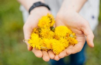 Как приготовить варенье из цветков одуванчика, польза и вред сладкого лакомства