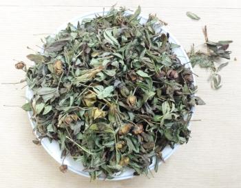 Курильский чай: полезные и лечебные свойства, противопоказания, применение в косметологии