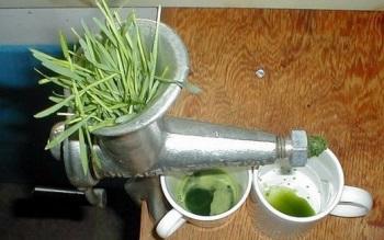 Как употреблять пырей ползучий - лечебные свойства, показания и противопоказания растения
