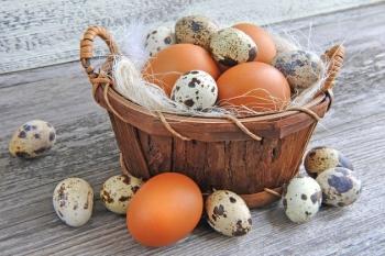 Яйца цесарки: польза и вред, сравнение полезности